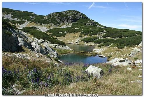 Lacul Păsări, foto Marius