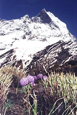 Machhapuchhare, vedere de undeva mai sus de MBC, foto Marius